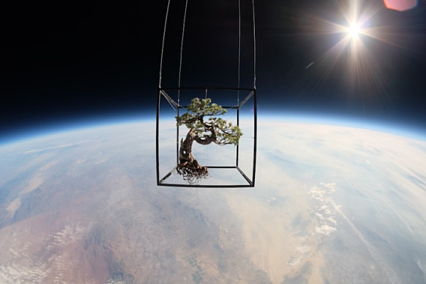 Space Bonsai Exobiotanica