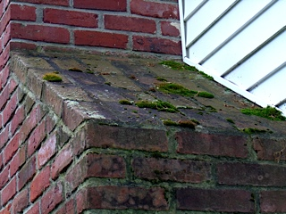 Moss corrodes bricks and mortar