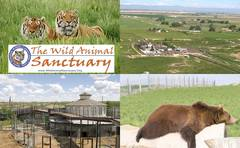 The Wild Animal Sanctuary